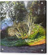 Frosty Morning Near Nant Clwyd, North Wales Acrylic Print