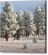Frosty Pikes National Forest Acrylic Print