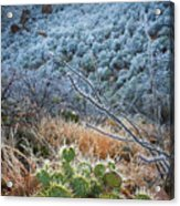 Frosty Prickly Pear Acrylic Print