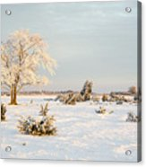 Frosty Solitude Tree In The First Morning Sunshine Acrylic Print
