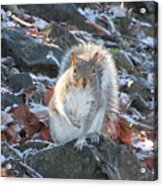 Frosty Squirrel Acrylic Print