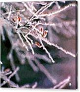 Frosty Twigs Acrylic Print