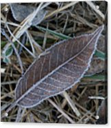 Frosty Veined Leaf Acrylic Print