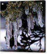 Frozen 4 Acrylic Print