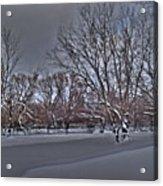 Frozen At The Creek's Edge Acrylic Print