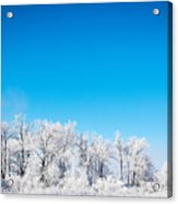 Frozen Beauty  Acrylic Print