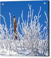 Frozen Fence Post Acrylic Print