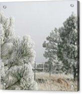 Frozen Fog On Pine Trees Acrylic Print