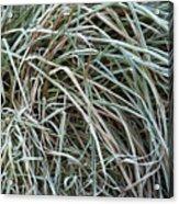 Frozen Grass - Ground Frost Acrylic Print