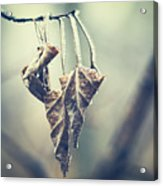 Frozen Leaves Acrylic Print