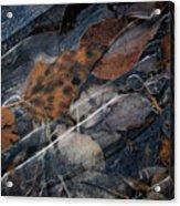 Frozen Leaves In Fall Acrylic Print