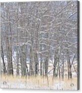 Frozen Limbs Acrylic Print