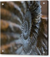 Frozen Spiral Acrylic Print