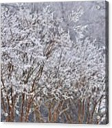 Frozen Trees During Winter Storm Acrylic Print