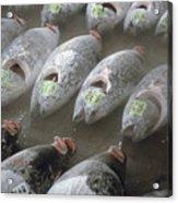 Frozen Tuna Fish At The Tsukiji Acrylic Print