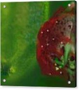 Fruit II Acrylic Print