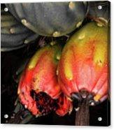 Fruit Is The Star Acrylic Print