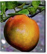Fruit On The Tree Acrylic Print