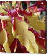 Fruit Roll Up Plant Acrylic Print