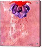 Fuchsia Blue Eyes Acrylic Print