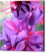 Fuchsia Drama Acrylic Print