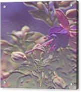 Fuchsia Flowers Acrylic Print