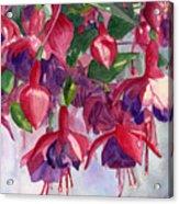 Fuchsia Frenzy Acrylic Print by Lynne Reichhart