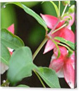 Fuchsia From Above Acrylic Print