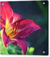 Fuchsia Palette Acrylic Print