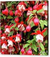 Fuchsia Pastel Acrylic Print