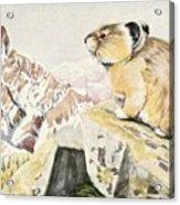 Fuertes, Louis Agassiz 1874-1927 - Burgess Animal Book For Children 1920 Pika Acrylic Print