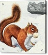 Fuertes, Louis Agassiz 1874-1927 - Burgess Animal Book For Children 1920 Red Squirrel Acrylic Print