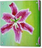 Full Bloom Acrylic Print by Missy Yake