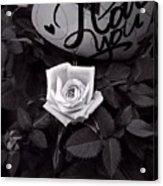 Full Blown Love Acrylic Print