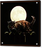 Full Moon Cat Acrylic Print