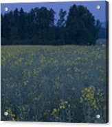 Full Moon Setting Over Rapeseed Field Acrylic Print