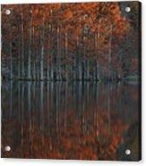 Full Of Glory - Cypress Trees In Autumn Acrylic Print
