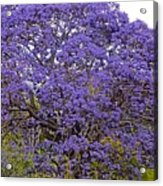 Full On Purple Acrylic Print
