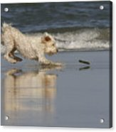 Fun In The Surf Acrylic Print
