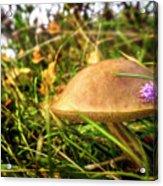 Funghi, Cashel Forest Acrylic Print