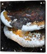 Fungi In Dew Acrylic Print