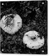 Fungi No 3 Bw Acrylic Print