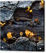 Fungi On Log Acrylic Print