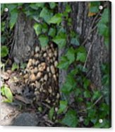 Fungus At Base Of Tree Acrylic Print