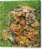 Fungus Bouquet Acrylic Print