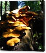 Fungus Colony 23 Acrylic Print
