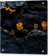 Fungus On Log Acrylic Print