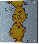 Funny Chickens Acrylic Print