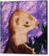 Funny Ferret Acrylic Print