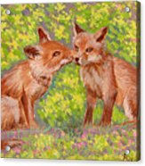Funny Foxes .2007 Acrylic Print